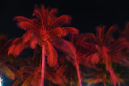 miamipalmtrees