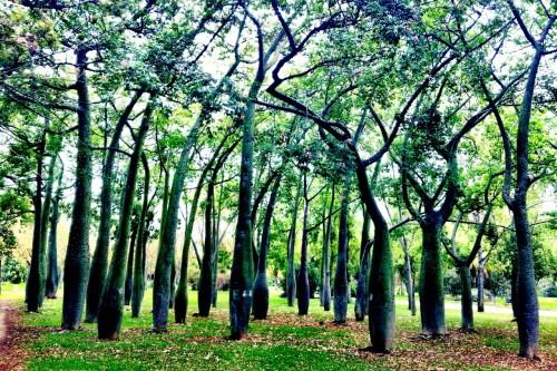 12.1380811888.jardin-del-turia
