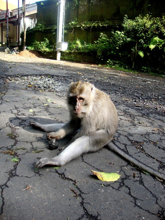 7.1295612153.the-monkeys-i-passed-on-the-street